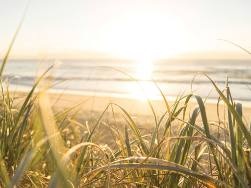 Sunlight on sea and grasses