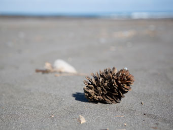 Cone lying on black sand