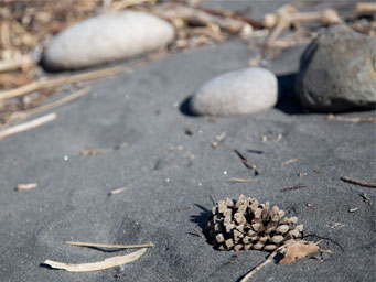 Close up of black sand beach with cone and large pebbles