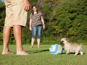 Two people playing with dog and rugby ball in field