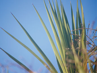 Green fronds of plant against a bright blue sky
