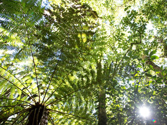 View of fern trees from below