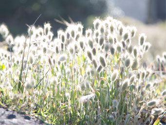 Low lying plants bathed in sunlight