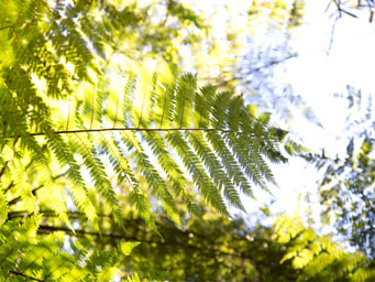 Sunlight shining through some green ferns